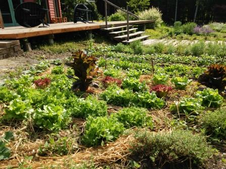 ミンタル菜園